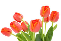 tulipany pomarańczowe Zdjęcia Royalty Free