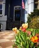 Tulipany przed patriotycznym domem miejskim w wiośnie zdjęcia royalty free