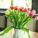 Tulipany przy okno Zdjęcia Stock