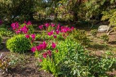 Tulipany Przy Seward parkiem zdjęcia royalty free