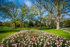 Tulipany przy Sherwood ogródów parkiem w Baltimore, Maryland obraz stock