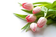 tulipany różowe Zdjęcia Royalty Free