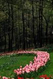 Tulipany są w pełnym kwiacie w Hangzhou, Obrazy Stock