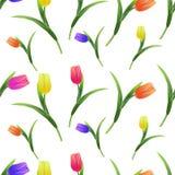 Tulipany simless pattern5-01 Zdjęcia Royalty Free