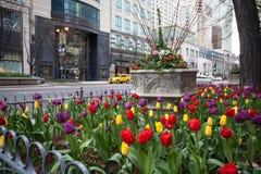 Tulipany w Chicago zdjęcia stock
