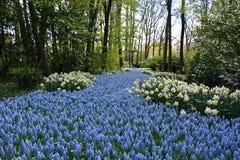 Tulipany w Keukenhof Obraz Stock