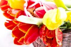 Tulipany w koszykowym zbliżeniu Obraz Royalty Free