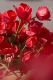 Tulipany w ogródzie Zdjęcie Stock
