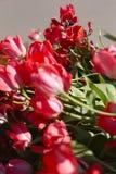 Tulipany w ogródzie Zdjęcia Stock