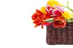 Tulipany w łozinowym koszu Obraz Stock