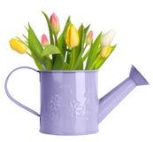 Tulipany w podlewanie puszce Fotografia Stock