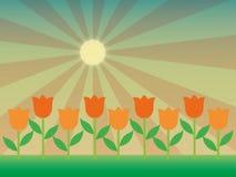 Tulipany w słońcu Zdjęcia Royalty Free
