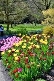 Tulipany w Van duSen Ogród Vancouver BC Harbpr fotografia royalty free