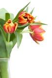 tulipany wazowi czerwone Obrazy Stock