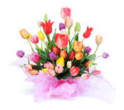 tulipany wielo- kolorowych Obrazy Royalty Free