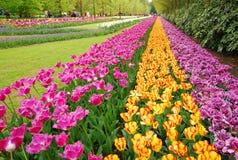 Tulipany Wiosna Tło Zdjęcia Royalty Free