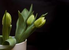 tulipany zielone. Zdjęcia Stock