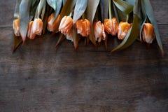 Tulipas alaranjadas bonitas em um fundo de madeira escuro fotografia de stock royalty free