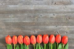 Tulipas alaranjadas indicadas em um fundo de madeira Fotografia de Stock Royalty Free