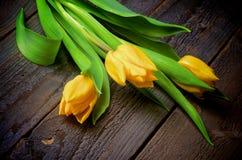 Tulipas amarelas Imagens de Stock Royalty Free