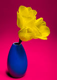 Tulipas amarelas Imagem de Stock Royalty Free