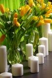 Tulipas amarelas Fotografia de Stock