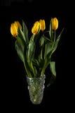 Tulipas amarelas brilhantes em um vaso de cristal Imagem de Stock