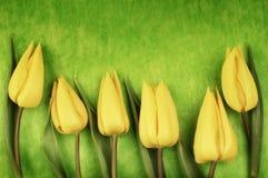 Tulipas amarelas de easter foto de stock