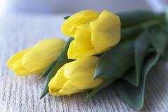 Tulipas amarelas Dia do `s do Valentim Dia do `s das mulheres 8 de março Um horizonta Fotografia de Stock Royalty Free