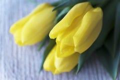 Tulipas amarelas Dia do `s do Valentim Dia do `s das mulheres 8 de março Um horizonta Fotos de Stock