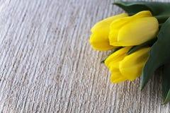 Tulipas amarelas Dia do `s do Valentim Dia do `s das mulheres 8 de março Um horizonta Fotos de Stock Royalty Free