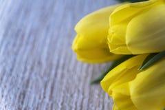 Tulipas amarelas Dia do `s do Valentim Dia do `s das mulheres 8 de março Um horizonta Imagem de Stock Royalty Free