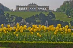 Tulipas amarelas na frente da construção de Gloriette na parte superior do parque e do palácio de Schenbrunn em Viena Fotos de Stock Royalty Free