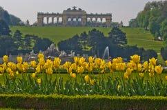 Tulipas amarelas na frente da construção de Gloriette na parte superior do parque e do palácio de Schenbrunn em Viena Imagem de Stock Royalty Free