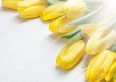 Tulipas amarelas no fundo de madeira branco Mola - cartaz com espaço do texto livre Foto de Stock