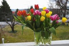 Tulipas amarelas, vermelhas e roxas em um vaso Fotos de Stock Royalty Free