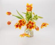 Tulipas amarelas vermelhas inteiramente abertas no vaso foto de stock royalty free