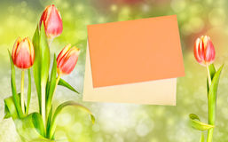 Tulipas ao lado de um envelope alaranjado no fundo branco Fotos de Stock Royalty Free