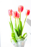Tulipas bonitas das flores Fotografia de Stock