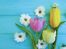 Tulipas bonitas do dia de mães do cumprimento do crisântemo, em um fundo de madeira azul Fotos de Stock