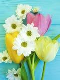 Tulipas bonitas do dia de mães do cumprimento do fundo da celebração do crisântemo, em um fundo de madeira azul Imagem de Stock Royalty Free