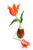 Tulipas bonitas em um vaso cerâmico Imagem de Stock