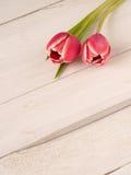 Tulipas bonitas na madeira branca Imagem de Stock Royalty Free