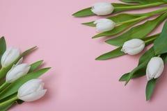 Tulipas brancas em um fundo cor-de-rosa Imagens de Stock Royalty Free