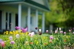 Tulipas coloridas bonitas na frente de uma casa Fotografia de Stock Royalty Free