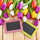 Tulipas coloridas na primavera Fotografia de Stock Royalty Free