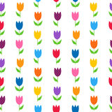 Tulipas coloridas sobre o teste padrão sem emenda branco Fotos de Stock Royalty Free