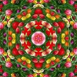 Tulipas coloridos Fotos de Stock Royalty Free