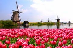 Tulipas com moinhos de vento e o canal holandeses Fotos de Stock Royalty Free