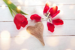 Tulipas com um coração para o dia de mães Imagens de Stock